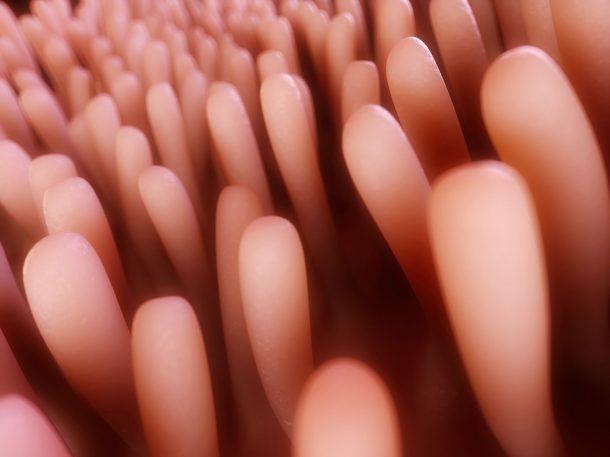 Assorbimento intestinale dei grassi